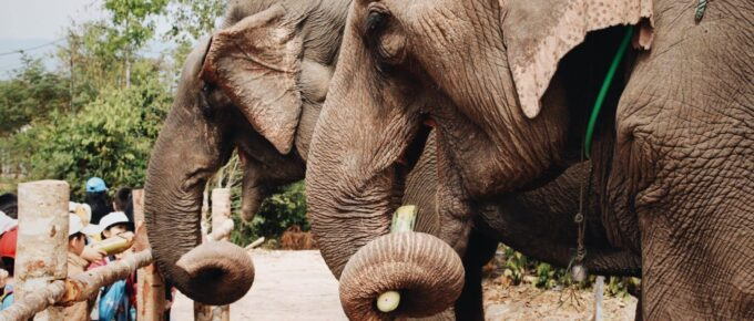 Two elephants at a zoo facing the visitors