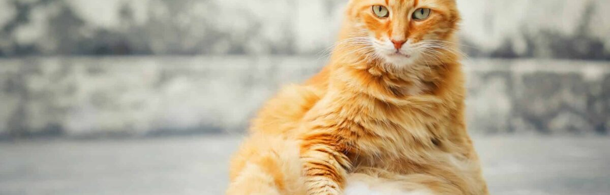 Cat sitting upright, looking unimpressed