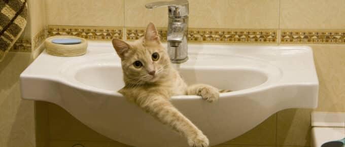 Orange tabby cat lying in bathroom sink