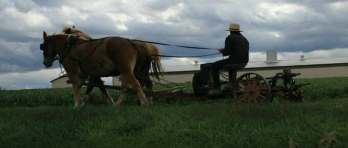 An Amish man ploughing