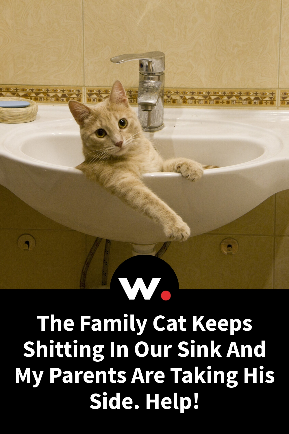 The Family Cat Keeps Shitting In Our Sink And My Parents Are Taking His Side. Help!
