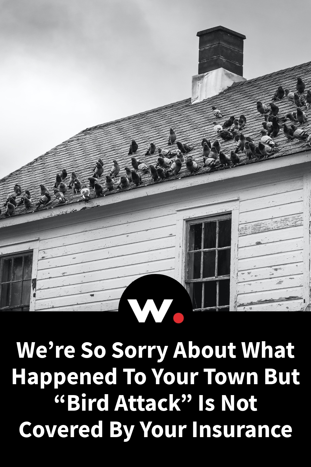 """We're So Sorry About What Happened To Your Town But """"Bird Attack"""" Is Not Covered By Your Insurance"""